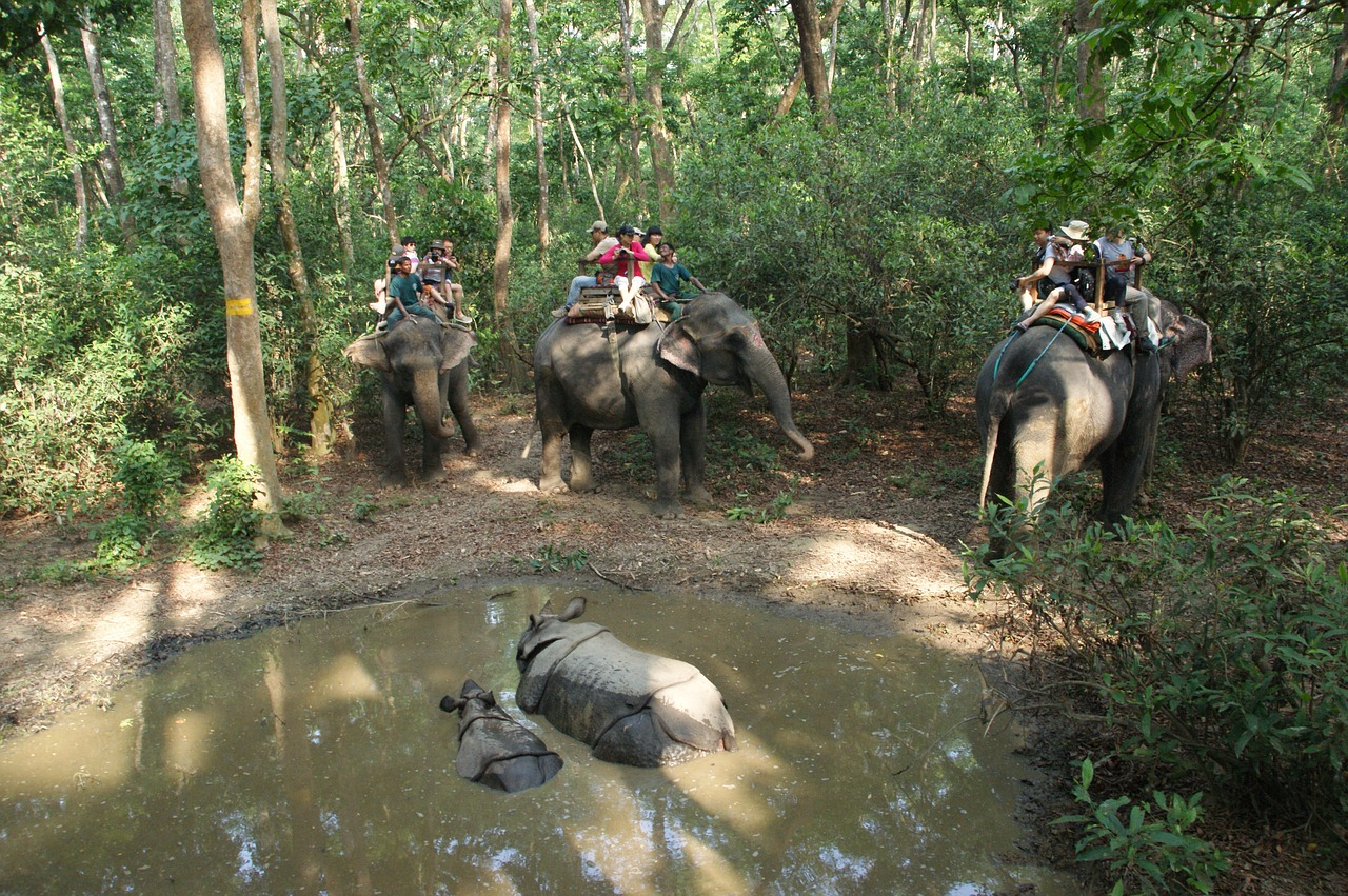 Elephant Riding on forest