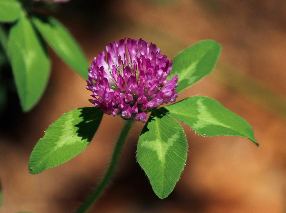 Beautiful Flower !